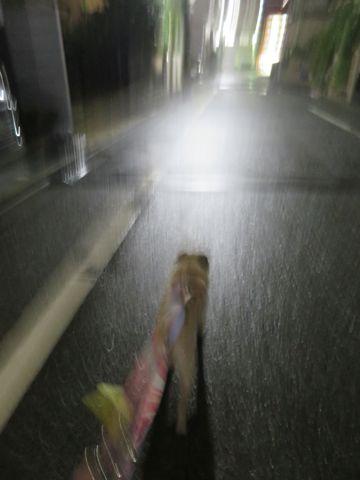 パグペットホテル様子おさんぽ犬おあずかり文京区フントヒュッテ東京パグトリミング画像都内ペットホテル駒込パグ夏注意パグ夏対策短頭種とは_2_39.jpg