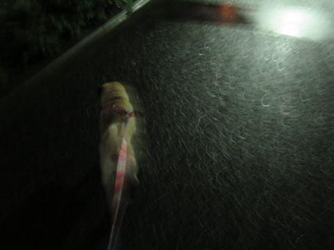 パグペットホテル様子おさんぽ犬おあずかり文京区フントヒュッテ東京パグトリミング画像都内ペットホテル駒込パグ夏注意パグ夏対策短頭種とは_2_84.jpg