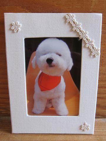 ビションフリーゼ駒込トリミング東京フントヒュッテ文京区かわいいビションこいぬトリミング時期子犬ビションフリーゼテディベアカット画像_6.jpg