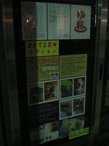 トリミングカットスタイル画像フントヒュッテ文京区犬カットモデル東京トイプードルカットスタイルビションフリーゼカット画像トイプーのビションカット駒込_10.jpg
