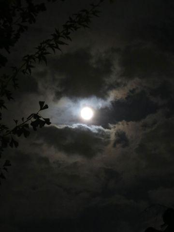 スーパームーン 2015年9月28日 1年のうちで月が地球に最も近づくタイミングと満月のタイミングが一致するため、普段より大きく、明るく見える。 画像 撮影 6.jpg