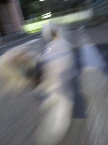 ホテル犬ペットホテル駒込フントヒュッテ文京区犬おあずかりシーズーダックスチワワ多頭飼い東京ペットホテル様子犬オスマナーベルトおすすめ画像都内おさんぽ_87.jpg