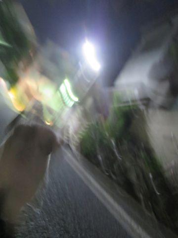 ホテル犬ペットホテル駒込フントヒュッテ文京区犬おあずかりシーズーダックスチワワ多頭飼い東京ペットホテル様子犬オスマナーベルトおすすめ画像都内おさんぽ_135.jpg