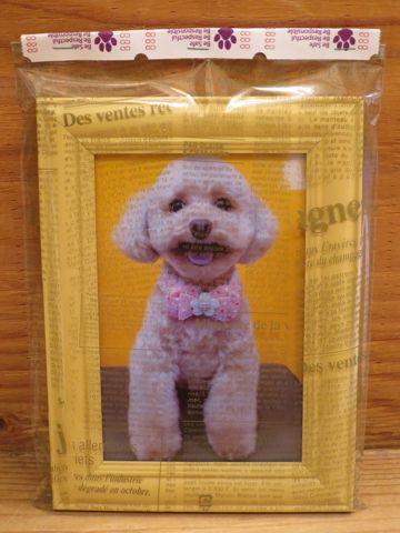 トイプードルトリミング文京区フントヒュッテ駒込テディベアカットトイプー東京かわいいトイプードル画像トイプードルカットモデル写真関東Toy Poodle41.jpg