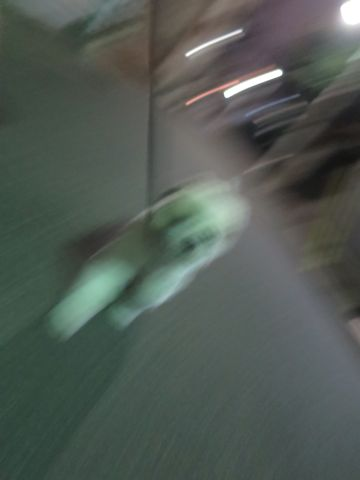 ホテル犬ペットホテル駒込フントヒュッテ文京区犬おあずかりシーズーダックスチワワ多頭飼い東京ペットホテル様子犬オスマナーベルトおすすめ画像都内おさんぽ_153.jpg