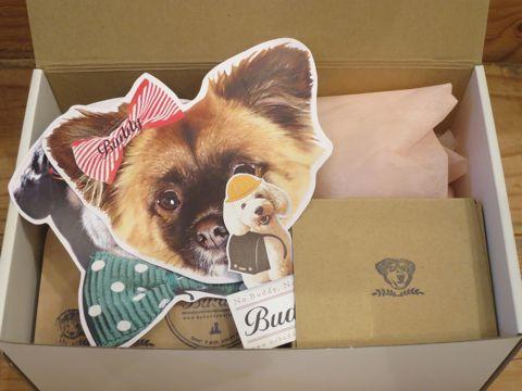 Buddy 犬 保護犬 コーヒー ハロウィンギフト ボックス入りコーヒー ギフトセット Buddyオリジナルマグカップ 画像 場所 会社 店舗 里親制度 犬猫の殺処分 5.jpg