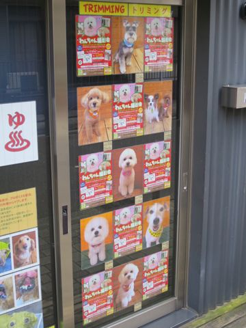 トリミングカットスタイル画像フントヒュッテ文京区犬カットモデル東京トイプードルカットスタイルビションフリーゼカット画像トイプーのビションカット駒込_15.jpg