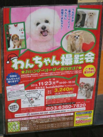 トリミングカットスタイル画像フントヒュッテ文京区犬カットモデル東京トイプードルカットスタイルビションフリーゼカット画像トイプーのビションカット駒込_23.jpg