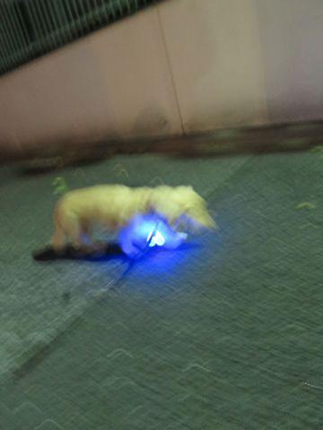 ダックストリミング東京ダックスフントミニチュアトリミング料金フントヒュッテ駒込かわいいダックス画像ダックスシャンプー+部分カット文京区犬デンタルケア_98.jpg