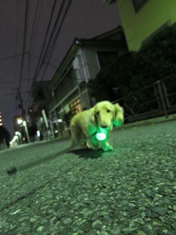 ダックストリミング東京ダックスフントミニチュアトリミング料金フントヒュッテ駒込かわいいダックス画像ダックスシャンプー+部分カット文京区犬デンタルケア_99.jpg