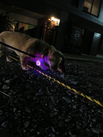 ダックストリミング東京ダックスフントミニチュアトリミング料金フントヒュッテ駒込かわいいダックス画像ダックスシャンプー+部分カット文京区犬デンタルケア_101.jpg