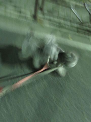 トイ・プードルペットホテル都内フントヒュッテ駒込犬おあずかり様子おさんぽ文京区hundehutte東京ペットホテルトイプードルシルバー画像ドッグホテル日記_11.jpg