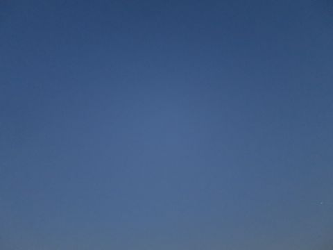 ビションフリーゼペットホテル都内フントヒュッテ駒込犬おあずかり様子おさんぽ文京区hundehutte東京ドッグホテルビションフリーゼ犬ホテル料金ペットホテル_64.jpg