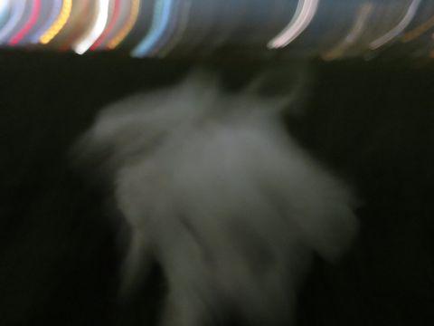 ビションフリーゼフントヒュッテ文京区駒込ビション子犬こいぬ赤ちゃん出産情報ビション父チャンピオン血統毛量オス子犬おんなのこ東京ビション画像性格かわいい_1048.jpg