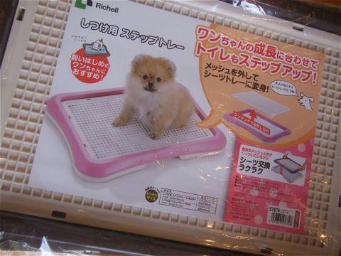 Richellリッチェルしつけ用ステップトレー幼犬時にはメッシュタイプ。大人になったらメッシュを外して使用できるトイレトレー。犬用トイレトレー画像オススメ犬トイレ躾_1.jpg