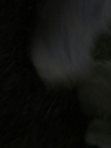 ビションフリーゼフントヒュッテ文京区駒込ビション子犬こいぬ赤ちゃん出産情報ビション父チャンピオン血統毛量オス子犬おんなのこ東京ビション画像性格かわいい_1123.jpg