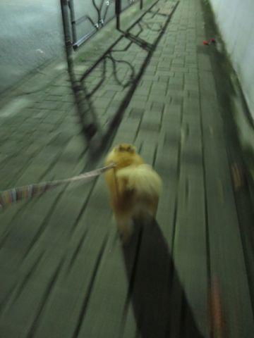 ポメラニアンペットホテル都内フントヒュッテ駒込犬おあずかり様子おさんぽ文京区hundehutte東京ドッグホテルポメラニアン犬ホテル料金ペットホテル様子画像_10.jpg