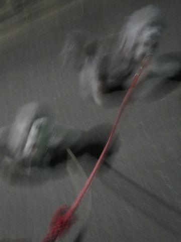 トイ・プードルペットホテル都内フントヒュッテ駒込犬おあずかり様子おさんぽ文京区hundehutte東京ペットホテルトイプードルシルバー画像ドッグホテル日記_118.jpg