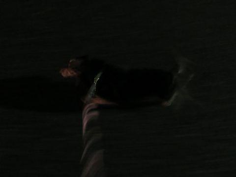 ダックスペットホテル様子おさんぽ犬おあずかり文京区フントヒュッテ東京ダックストリミング画像都内ペットホテル駒込カニヘンダックスカニンヘンダックス_5.jpg