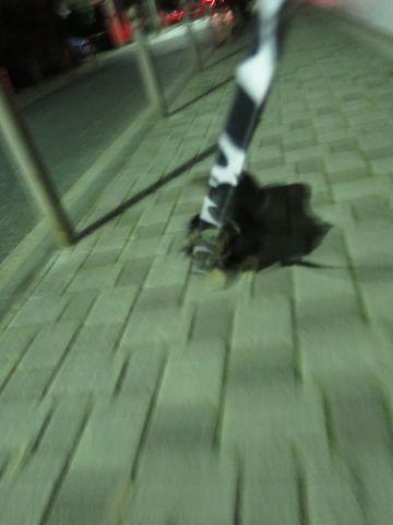 ダックスペットホテル様子おさんぽ犬おあずかり文京区フントヒュッテ東京ダックストリミング画像都内ペットホテル駒込カニヘンダックスカニンヘンダックス_7.jpg