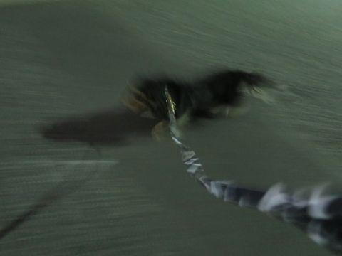 ダックスペットホテル様子おさんぽ犬おあずかり文京区フントヒュッテ東京ダックストリミング画像都内ペットホテル駒込カニヘンダックスカニンヘンダックス_36.jpg