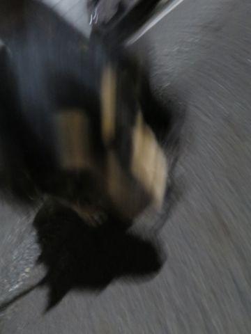 ダックスペットホテル様子おさんぽ犬おあずかり文京区フントヒュッテ東京ダックストリミング画像都内ペットホテル駒込カニヘンダックスカニンヘンダックス_39.jpg