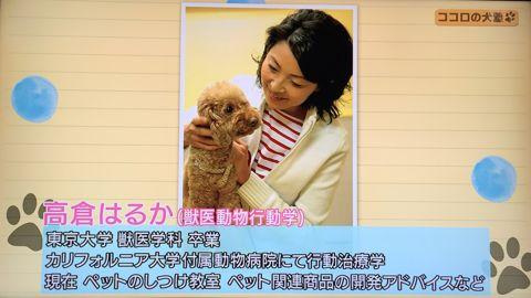 ココロの犬塾 NHK 趣味どきっ! ココロの犬塾  ? 空気の読めるワンちゃんをめざせ!?  高倉はるか (タカクラハルカ )講師 最初のしつけ その後の犬との暮らし 3.jpg