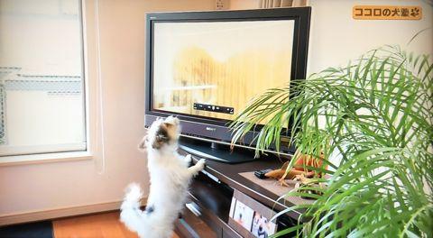 ココロの犬塾 NHK 趣味どきっ! ココロの犬塾  ? 空気の読めるワンちゃんをめざせ!?  高倉はるか (タカクラハルカ )講師 最初のしつけ その後の犬との暮らし 6.jpg