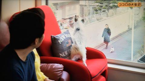 ココロの犬塾 NHK 趣味どきっ! ココロの犬塾  ? 空気の読めるワンちゃんをめざせ!?  高倉はるか (タカクラハルカ )講師 最初のしつけ その後の犬との暮らし 7.jpg