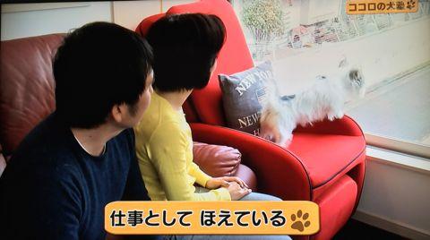 ココロの犬塾 NHK 趣味どきっ! ココロの犬塾  ? 空気の読めるワンちゃんをめざせ!?  高倉はるか (タカクラハルカ )講師 最初のしつけ その後の犬との暮らし 8.jpg