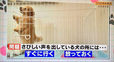 ココロの犬塾 NHK 趣味どきっ! ココロの犬塾  ? 空気の読めるワンちゃんをめざせ!?  高倉はるか (タカクラハルカ )講師 最初のしつけ その後の犬との暮らし 12.jpg
