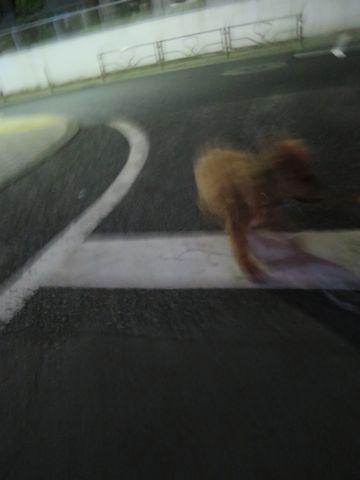 トイ・プードルペットホテル都内フントヒュッテ駒込犬おあずかり様子おさんぽ文京区hundehutte東京ドッグホテルトイプードル犬ホテル料金ペットホテルblog_31.jpg