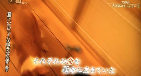 ドキュメント72時間 NHK 2016年4月15日放送 「大都会 犬と猫のシェルターで」 東京・代々木 動物シェルター 保護 譲渡会 ランコントレ・ミグノン 友森玲子 糸井重里 16.jpg