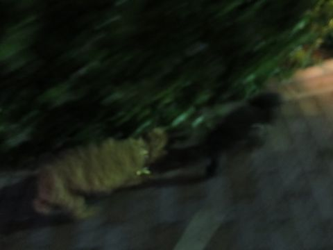 トイ・プードルペットホテル都内フントヒュッテ駒込犬おあずかり様子おさんぽ文京区hundehutte東京ドッグホテルトイプードル犬ホテル料金ペットホテルblog_40.jpg