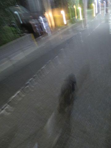 トイ・プードルペットホテル都内フントヒュッテ駒込犬おあずかり様子おさんぽ文京区hundehutte東京ドッグホテルトイプードル犬ホテル料金ペットホテルblog_41.jpg