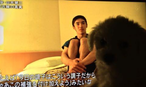 ビションフリーゼ子犬フントヒュッテこいぬ家族募集里親関東_1700.jpg