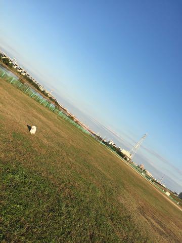 ビションフリーゼ子犬フントヒュッテこいぬ家族募集里親関東_1895.jpg