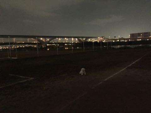 ビションフリーゼ子犬フントヒュッテこいぬ家族募集里親関東_2063.jpg