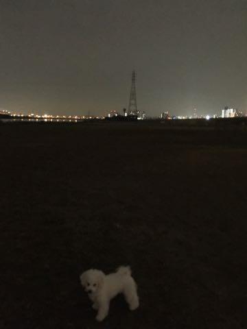 ビションフリーゼ子犬フントヒュッテこいぬ家族募集里親関東_2066.jpg