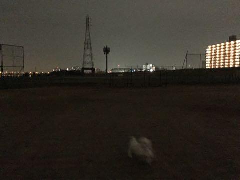 ビションフリーゼ子犬フントヒュッテこいぬ家族募集里親関東_2075.jpg