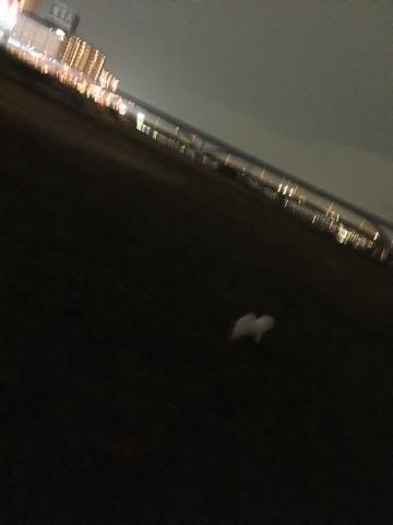 ビションフリーゼ子犬フントヒュッテこいぬ家族募集里親関東_2082.jpg