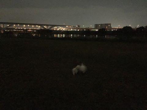ビションフリーゼ子犬フントヒュッテこいぬ家族募集里親関東_2088.jpg