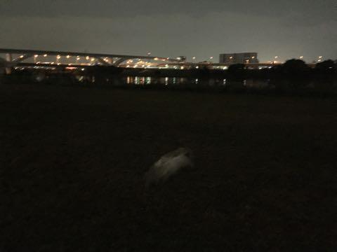 ビションフリーゼ子犬フントヒュッテこいぬ家族募集里親関東_2089.jpg