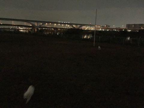 ビションフリーゼ子犬フントヒュッテこいぬ家族募集里親関東_2092.jpg