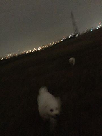 ビションフリーゼ子犬フントヒュッテこいぬ家族募集里親関東_2095.jpg