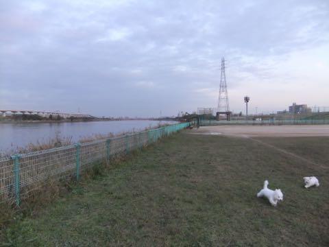 ビションフリーゼ子犬フントヒュッテこいぬ家族募集里親関東_2158.jpg