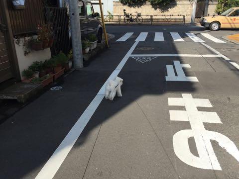 ビションフリーゼ子犬フントヒュッテこいぬ家族募集里親関東_2237.jpg
