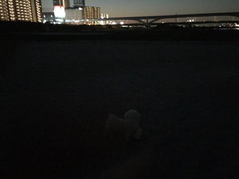ビションフリーゼ子犬フントヒュッテこいぬ家族募集里親関東_2292.jpg