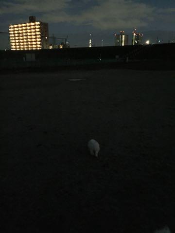 ビションフリーゼ子犬フントヒュッテこいぬ家族募集里親関東_2343.jpg