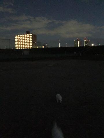 ビションフリーゼ子犬フントヒュッテこいぬ家族募集里親関東_2344.jpg